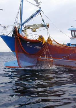bureau veritas fishery observation program